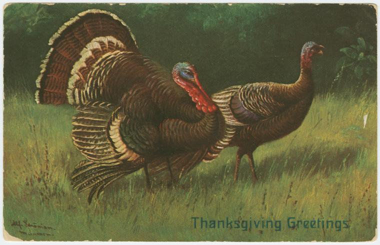 "1909 postcard of two large turkeys in the grass with a title reading, ""Happy Thanksgiving"""